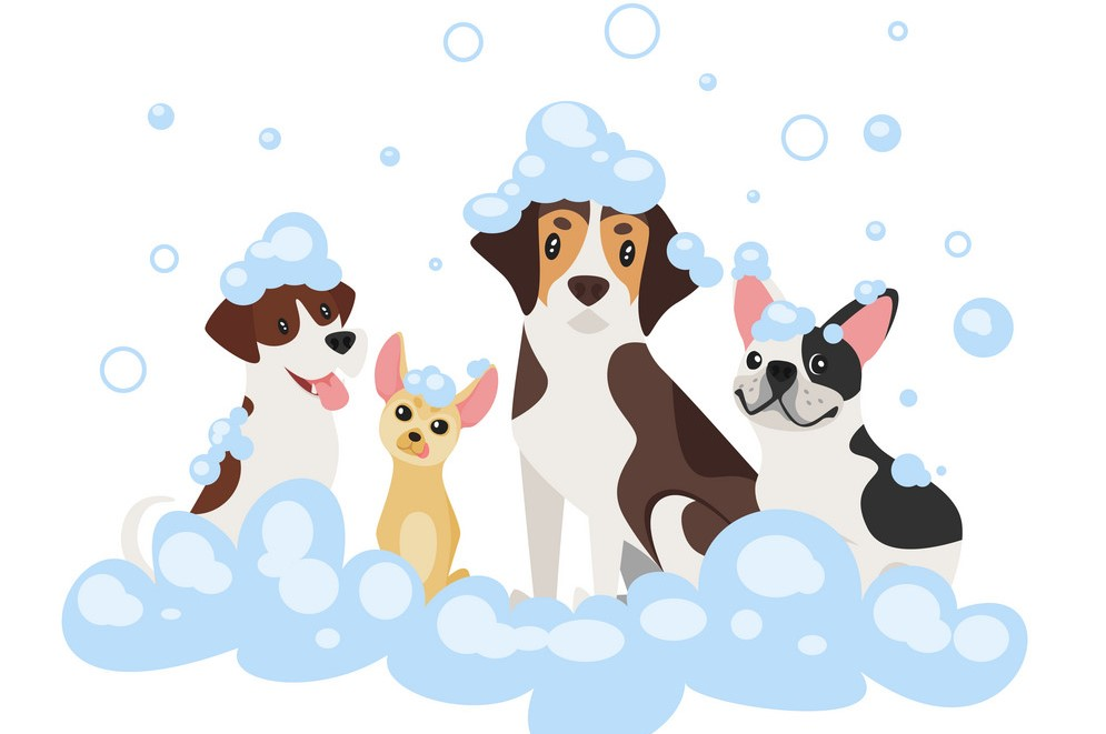 Step by Step Guide to Bathing and Grooming your Dog