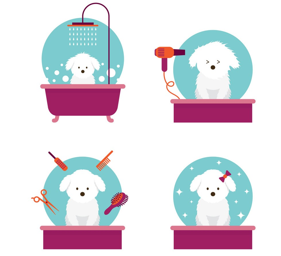 How To Groom and Bath a Dog (Step by Step Guide)