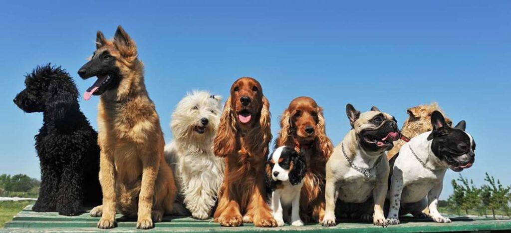 A group of Purebred Dog or Mixed Breed Dog