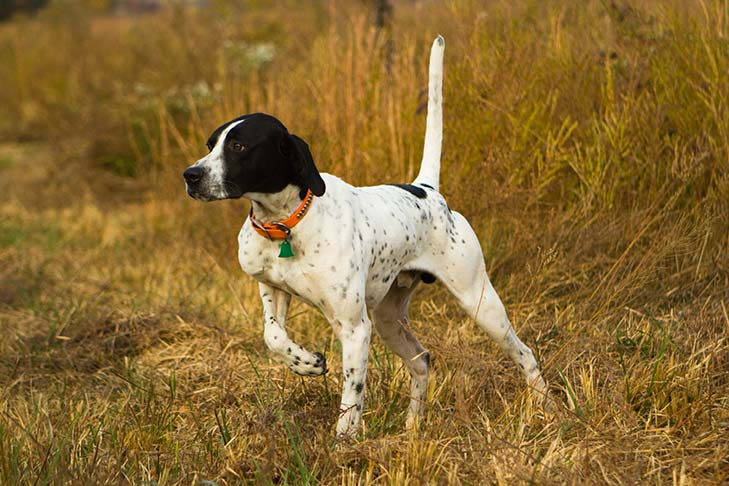 Pointer Personality