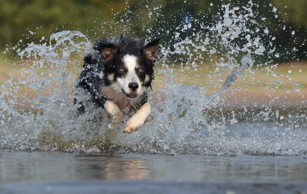 5 Easy Ways to Tire Out Your High Energy Dog