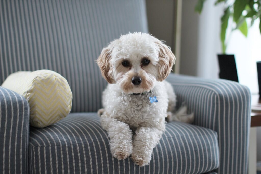 How to Keep the House Fresh When Living with Dogs