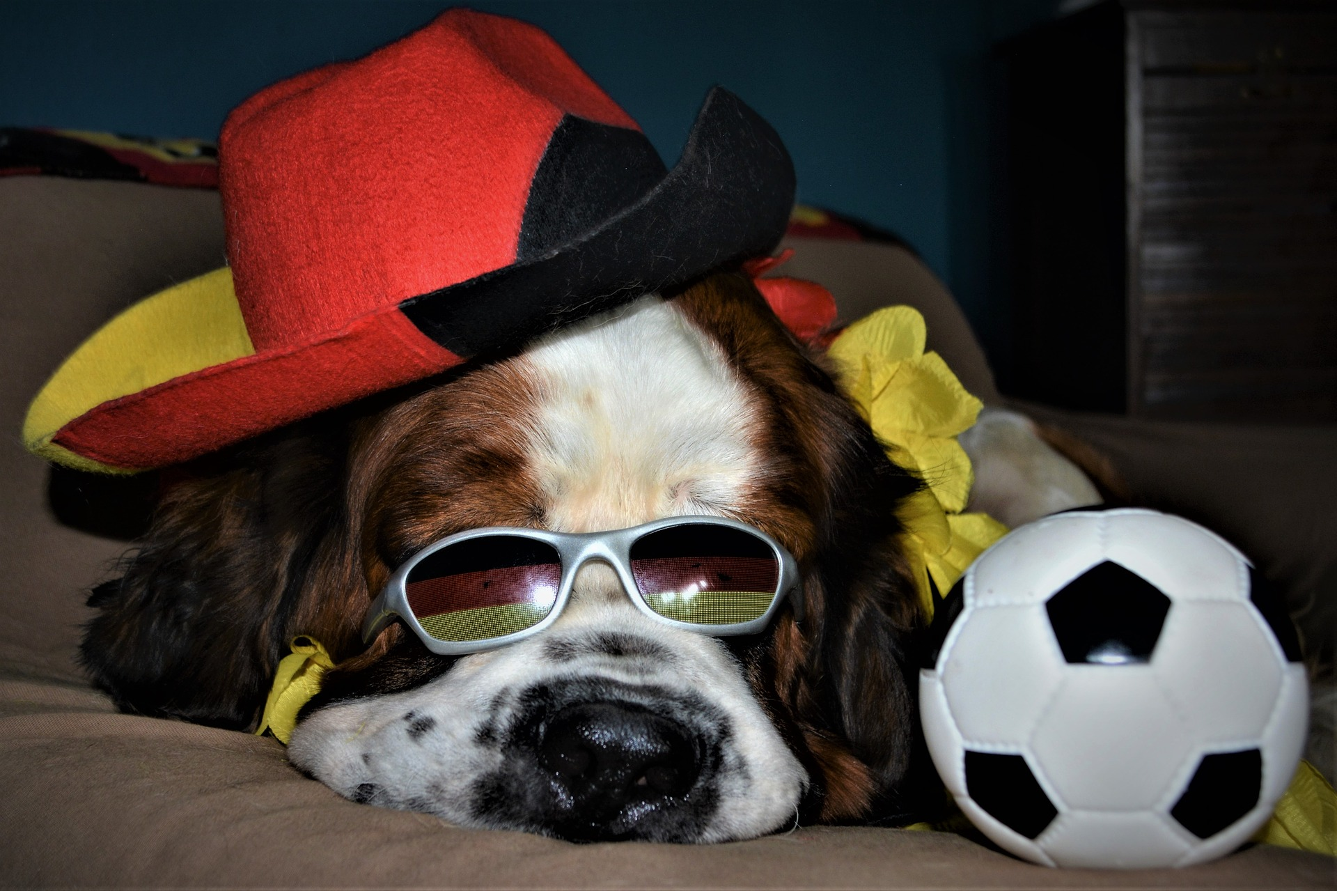 St. Bernard wearing red hat and shades