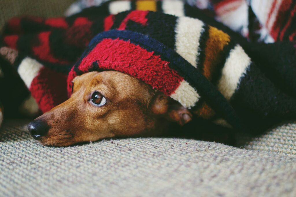 5 Things That Can Help Your Dog Stay Calm During Thunderstorms