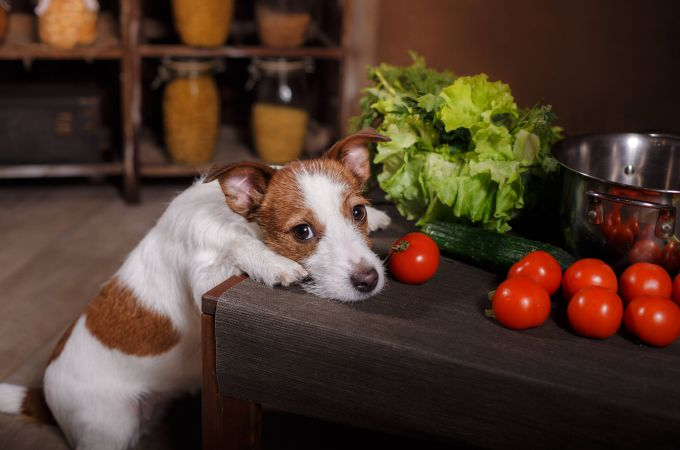 Can Dogs Eat Tomatoes? Are Tomatoes Poisonous for Dogs?