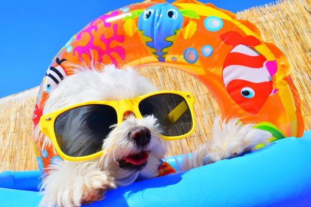 Sunscreen For Dogs: Everything Pet Parent's Should Know