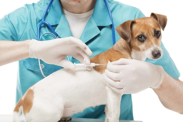 National Lost Pet Prevention Month: 7 Tips To Make Sure You Never Lose Your Dog