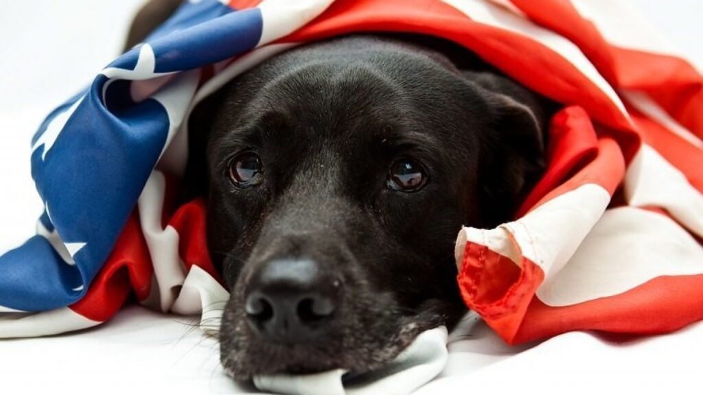 4th Of July Safety Tips For Dog Parents