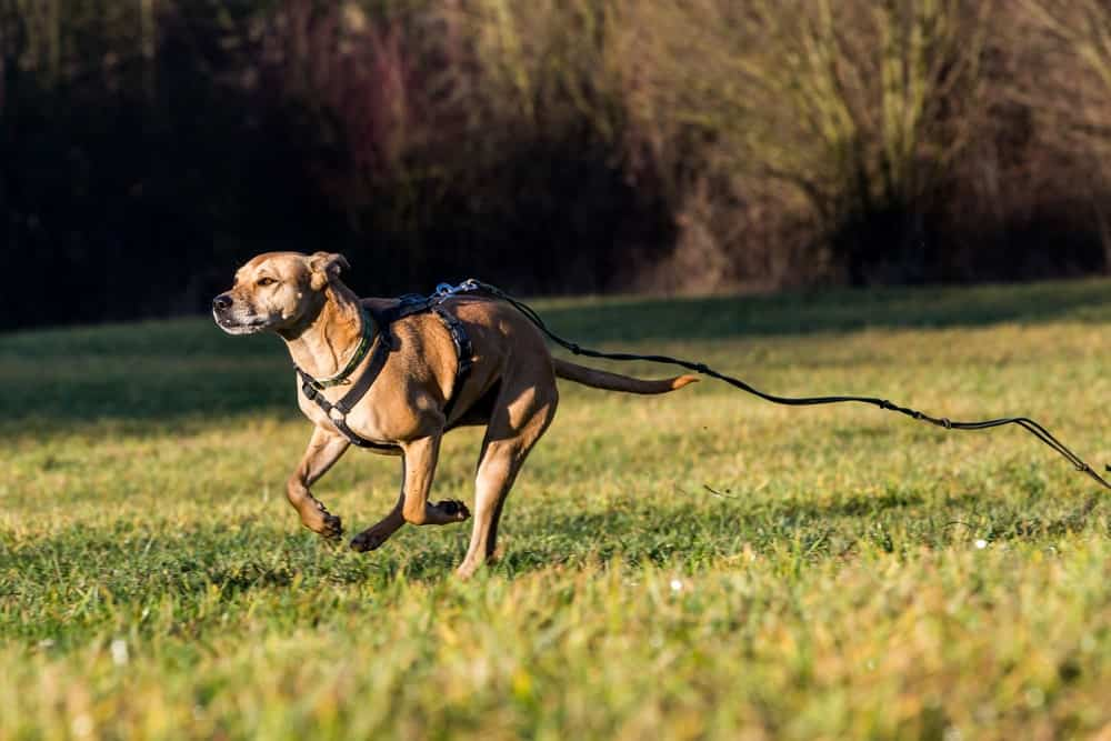 #National Lost Pet Prevention Month: