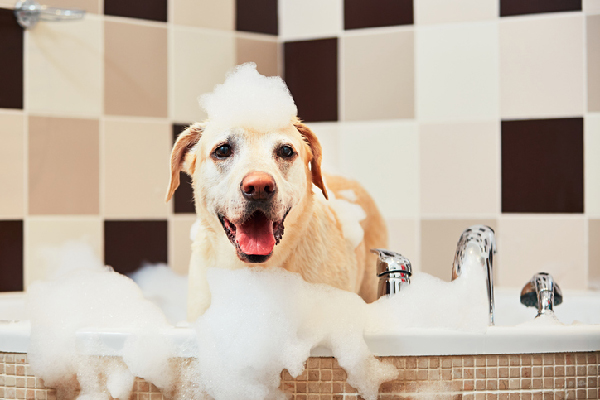 The Best Dog Shampoo and Conditioner Brands in 2020