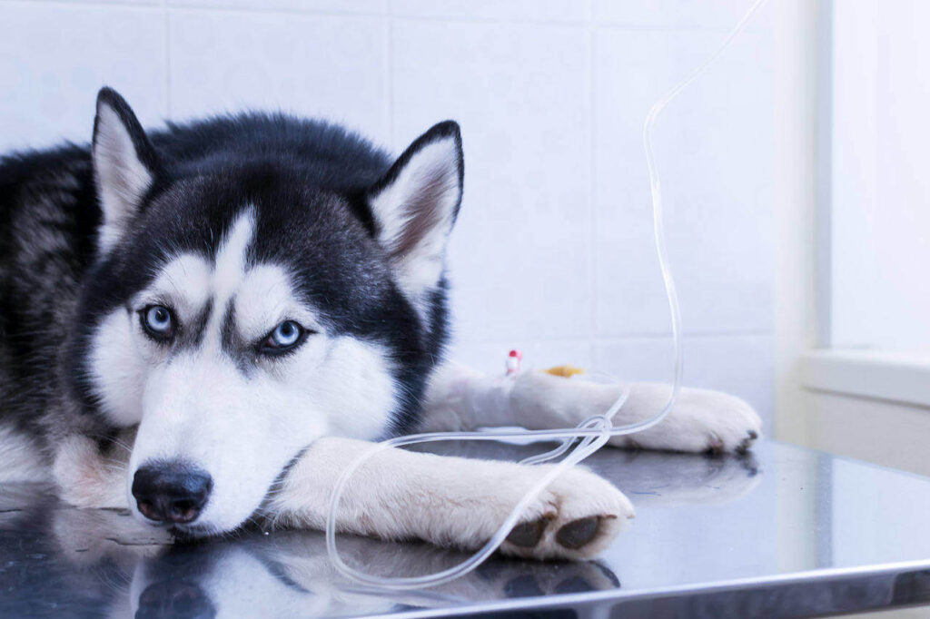 Kidney Problems in Dogs