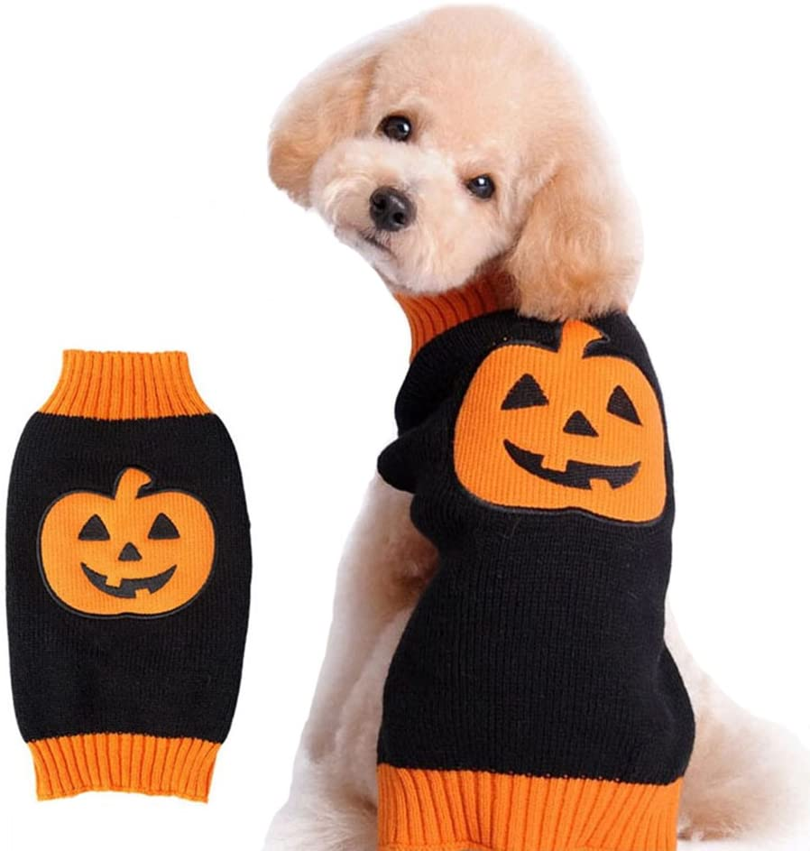 A poodle wearing a Pumpkin style Sweater