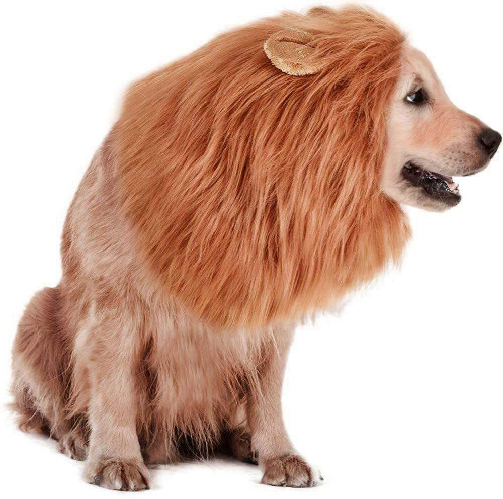 A dog wearing a lion mane and looks like a real lion