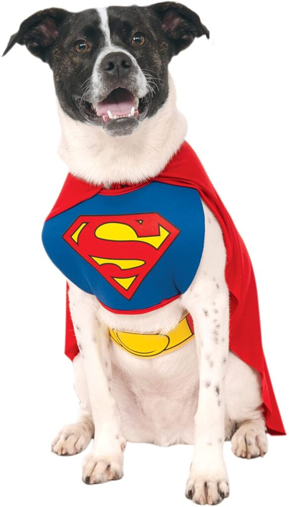 a large dog wearing a classic superman Dog Halloween Costumes