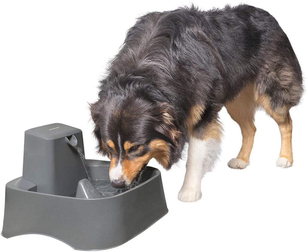 Best Pet Technology Products