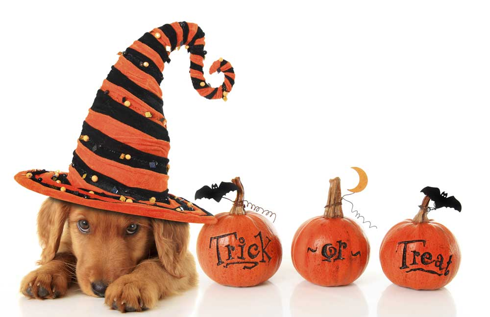 A puppy wearing a orange with black lines witch hat and beside is 3 pumpkin with engrave trick or treats word
