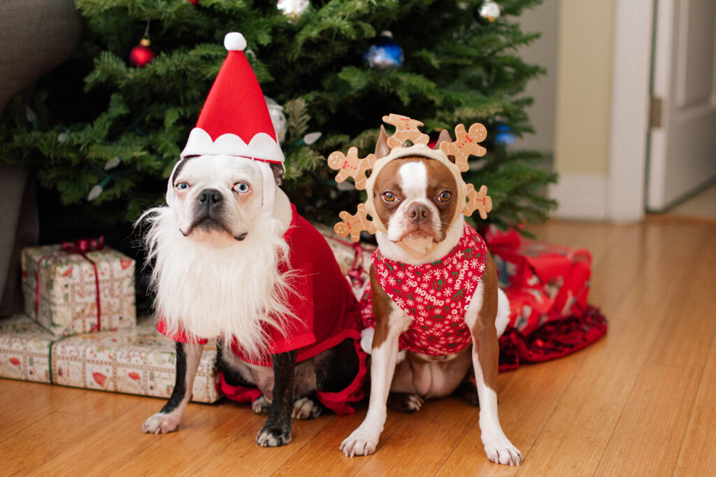 Best Christmas Dog Costumes
