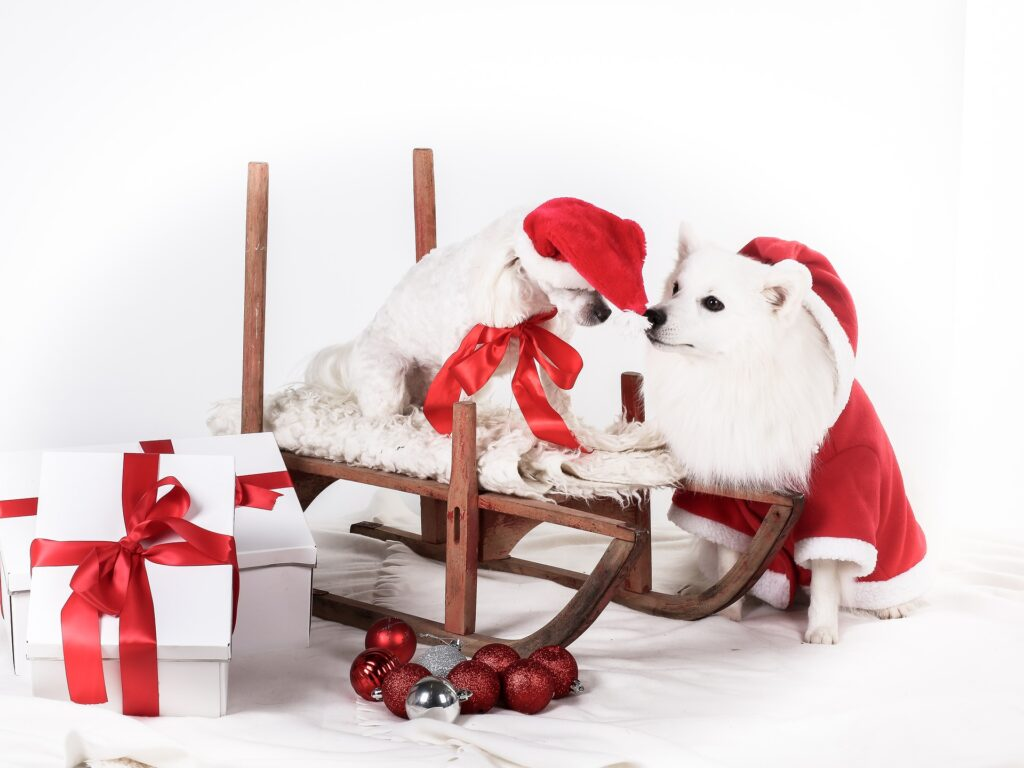 Two dog wearing a Santa costume