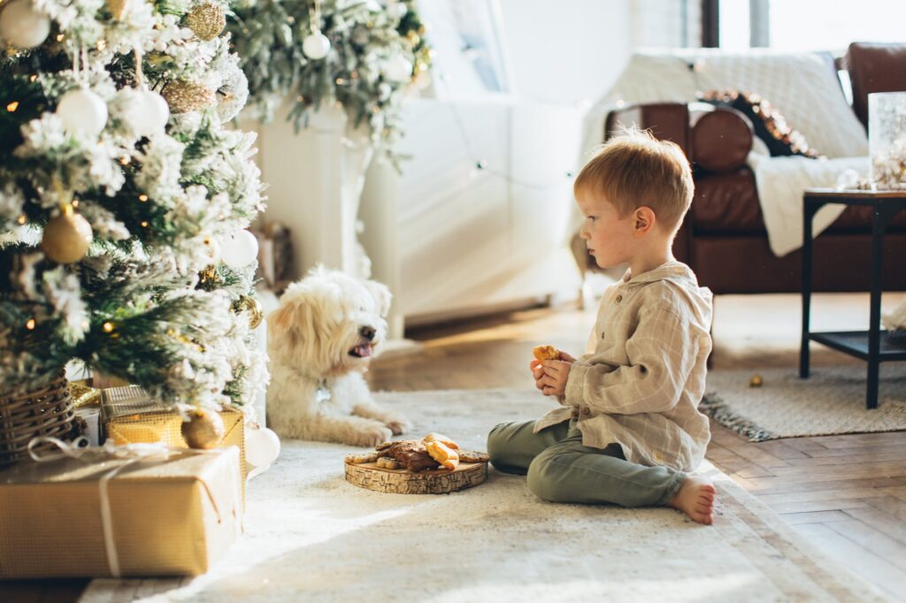 Best Christmas Gifts for Dog
