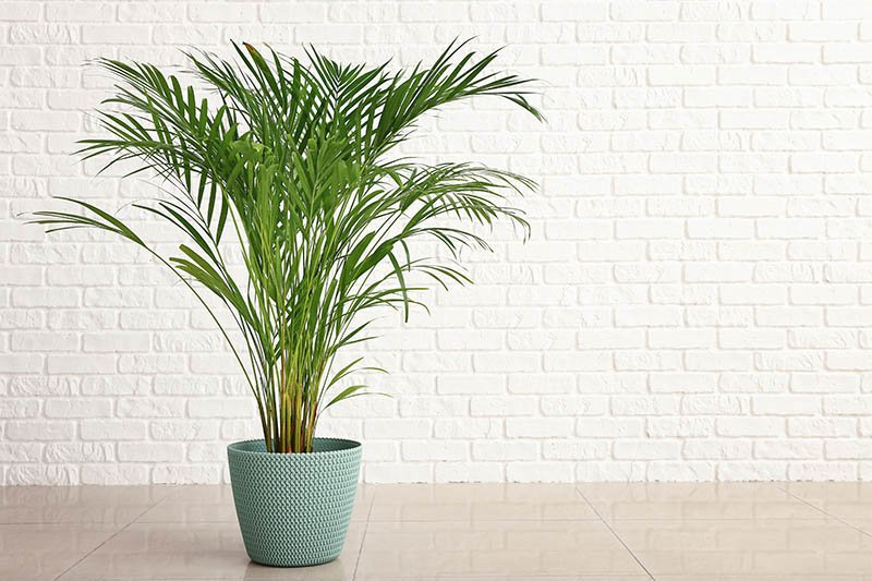 Palm in a beautiful green pot