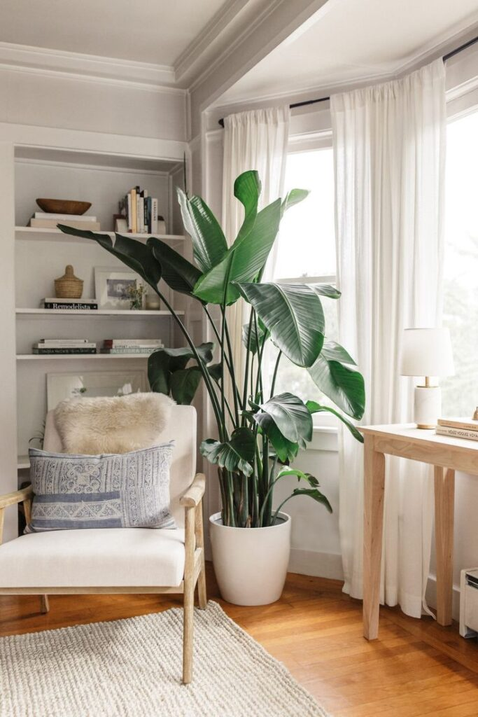 Banana an Air Purifying Plants Safe for Dogs