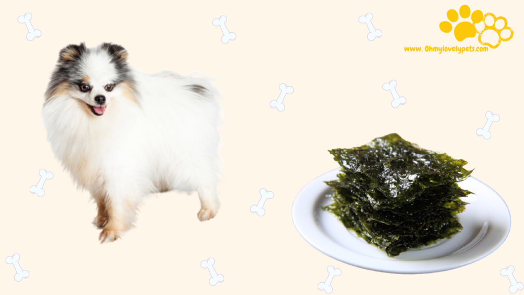 Can Dogs Eat Dried Seaweed?