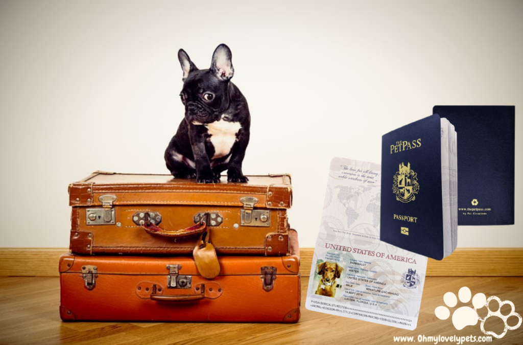 Pet Passport 101: Process, Requirements, and Cost